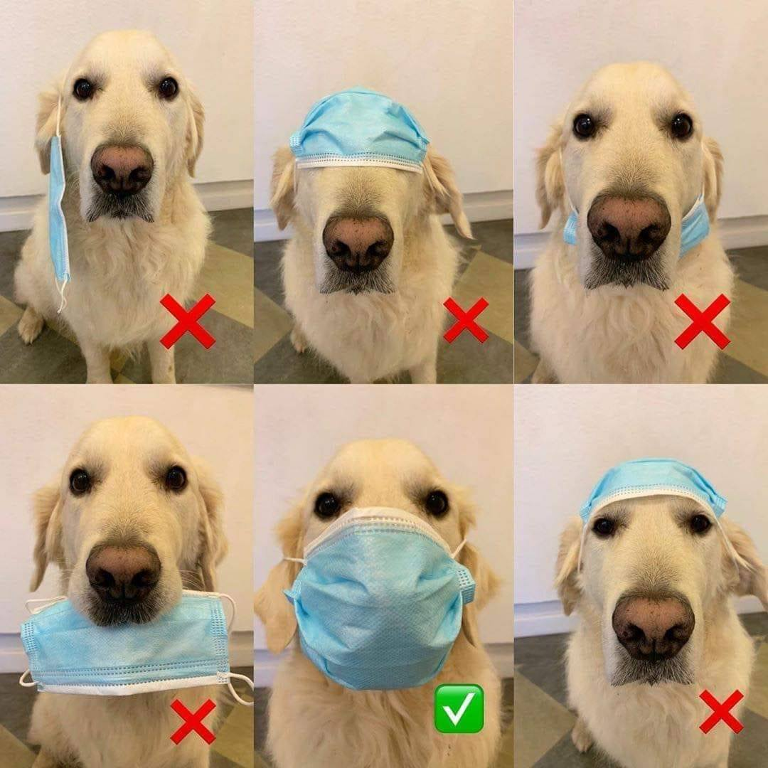 dog wearing coronavirus mask meme